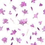 无缝的桃红色开花的花 免版税图库摄影