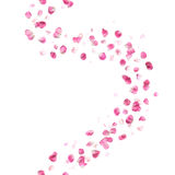 无缝的桃红色玫瑰花瓣样式 免版税库存照片