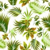 无缝的棕榈树样式热带叶子 库存照片图片
