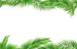 无缝的椰子叶子 库存照片