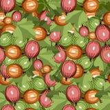 无缝的模式鹅莓 库存图片