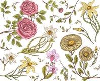 无缝的模式 与叶子和芽的玫瑰 婚姻的植物的花在庭院或春天植物中 装饰品或装饰 库存图片