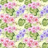 无缝的模式 五颜六色的兰花开花与概述,并且大绿色monstera在浅绿色的背景离开 向量例证