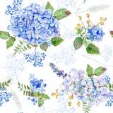 无缝的模式 传染媒介水彩蓝色八仙花属,淡紫色 免版税库存图片