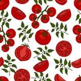 无缝的模式 在不同的蕃茄 皇族释放例证
