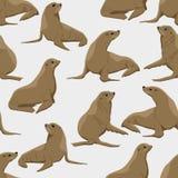 无缝的模式 封印用在单音背景的不同的姿势 Pinnipeds 向量例证