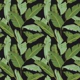 无缝的模式 热带棕榈叶背景 香蕉叶子 库存照片