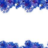 无缝的模式 矢车菊花束  库存图片