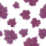 无缝的模式 紫色叶子在白色背景隔绝的盖埃尔 库存照片