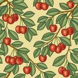 无缝的樱桃背景 免版税图库摄影