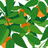 无缝的橘树 免版税库存图片