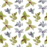 无缝的水彩样式 一套叶子 水彩绘了叶子 r 艺术设计的典雅的叶子 手油漆 库存例证