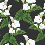 无缝的水芋百合开花背景,典雅的与花的时尚五颜六色的样式 皇族释放例证