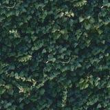 无缝的深绿常春藤墙壁样式 免版税图库摄影
