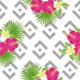 无缝的热带叶子和花-棕榈、monstera、木槿和羽毛以几何灰色为背景 皇族释放例证