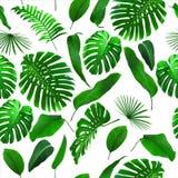 无缝的热带密林离开背景 免版税库存图片