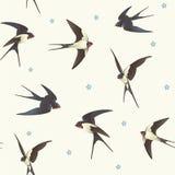 无缝的燕子 免版税库存图片