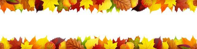无缝的秋叶横幅 库存照片