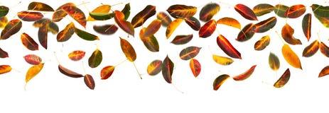 无缝的秋叶 免版税库存图片
