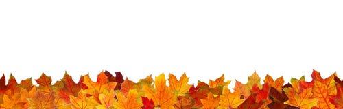 无缝的秋叶 库存照片