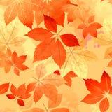 无缝的秋天叶子秋天样式 免版税库存照片