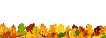 无缝的秋天橡木叶子 库存照片