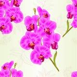 无缝的纹理分支兰花兰花植物紫色花和叶子热带植物词根和发芽自然本底葡萄酒v 向量例证