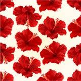 无缝的纹理红色木槿简单的热带花葡萄酒传染媒介 向量例证