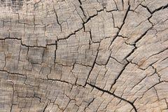 无缝的纹理背景老木镇压 免版税库存照片