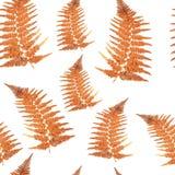 无缝的纹理-橙色蕨叶子 图库摄影