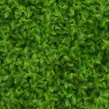 无缝的绿色叶子样式春天或夏天新背景 10 eps 库存例证