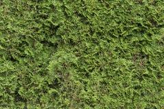 无缝的绿色套期交易在公园 库存照片