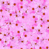 无缝的背景样式纹理由kosmeya鲜花制成 库存照片