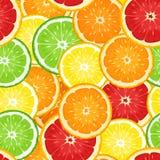 无缝的背景用柑橘水果。 向量例证