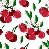 无缝的背景用樱桃和樱花 皇族释放例证