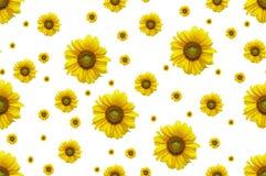 无缝的背景用花向日葵 免版税库存照片