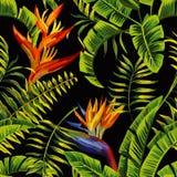 绘无缝的背景的热带植物 库存例证