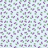 无缝的背景紫色樱桃 库存图片