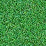 无缝的自然绿草混合背景 库存图片