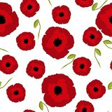 无缝的花卉样式仿效红色鸦片开花大,小与在白色的芽 免版税库存照片