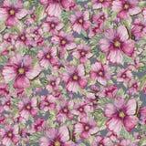 无缝的花卉样式由紫色锦葵属制成在灰色背景开花 多孔黏土更正高绘画photoshop非常质量扫描水彩 手拉和被绘的例证 免版税库存照片