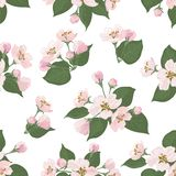 无缝的花卉样式,苹果树花 免版税库存照片