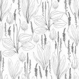无缝的草本样式伟大的大蕉,在白色背景隔绝的车前草属主要药用植物狂放的领域花 库存图片