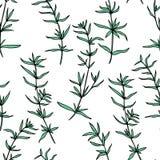 无缝的草本样式美味手拉的传染媒介植物的例证、健康医疗被隔绝的植物和草本  免版税库存照片