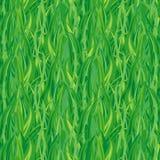 无缝的草绿色 皇族释放例证