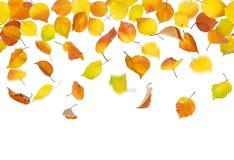 无缝的落的秋叶 免版税图库摄影