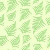 无缝的蕨背景 免版税图库摄影