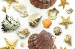 无缝的贝壳背景 免版税库存图片