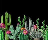 无缝的边界用仙人掌和花在黑暗的背景 也corel凹道例证向量 向量例证