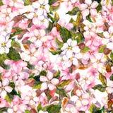 无缝的重复的花卉样式-桃红色樱桃和苹果花 水彩 库存照片